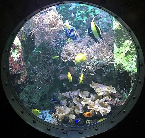 Uitzicht op de Gele zeilvindoktersvis, Rode Dwergkeizer en de Chrysiptera hemicyanea