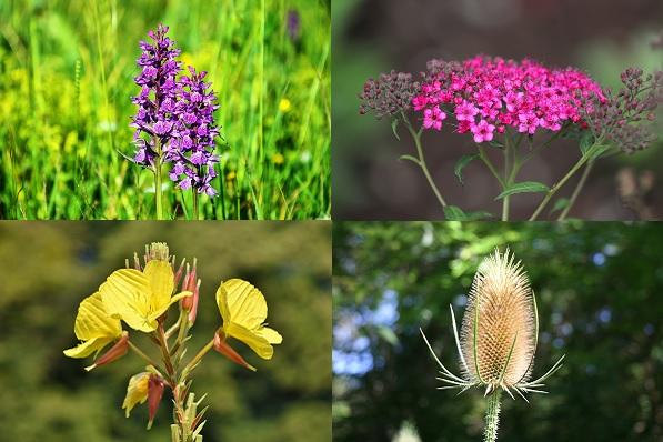 Een blik op orchideeën, spoorbloemen, teunisbloemen en kaardenbollen